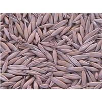 animal oats