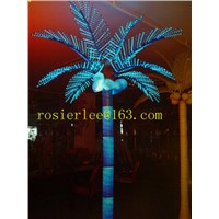 palm tree coconut tree road light