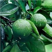 Citrus Extract