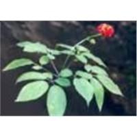 Ginseng (Panax) Extract Powder