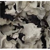 Dried Black and White Fungus