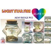 Lucky Star Fish