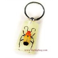 Insect Amber Key Chains