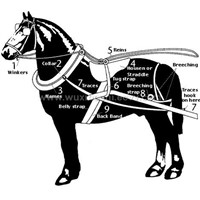 Harness equestrian items