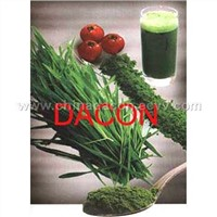 Barley Grass Powder & Wheat grass powder