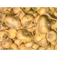 Maca (lepidium Meyenii Walp = Lepidium Peruvianum