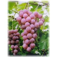 Grape Skin Extract with Resveratrol 5%