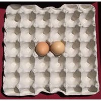 30 Egg Paper Trays