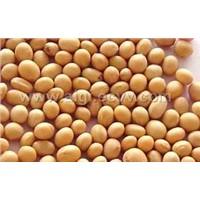 Soy bean Extract 40% Isoflavines