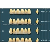 Two-story Color synthtic resin teeth