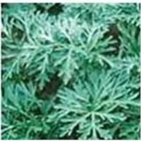 Artemisinin, Dihydroartemisinin