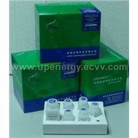 Plant Genomic DNA Purification Kit