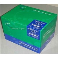 Tissue and Cell Total RNA Purification Kit