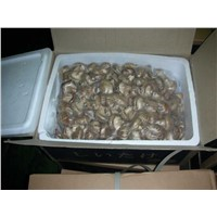 Fresh Shiitake Mushroom