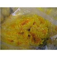 cut chrysanthemum