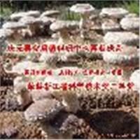 Lentinus edodes (shiitake) extract