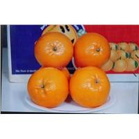 Fresh Mandarin Oranges/ Kinno