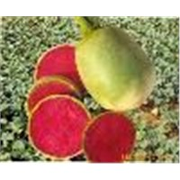 Radish red is a kind of natural pigment refined from red-heart radish through extraction,