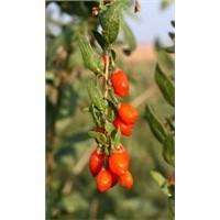 Sell Herbasin's herbal powder/granule