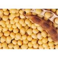 Soybean isoflavone  20%,40%,60%,70%,80%,90%