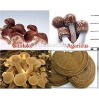Mushroom & mycelium powder