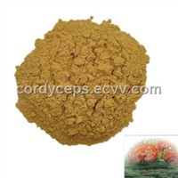 Reishi Polysaccharide(reishi, reishi powder, reishi mushroom, cordyceps, herb extract)