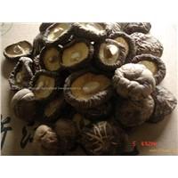 4cm-5cm Dried Mushroom.html
