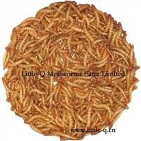 Dry Mealworm