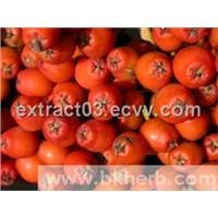 Aronia chokeberry extract