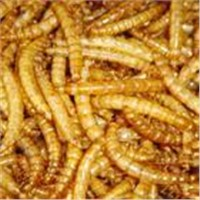 mealworm products