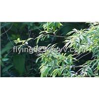 White willow bark P.E. (Salicin)
