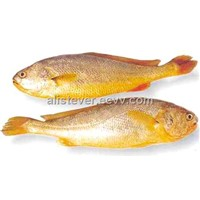 Frozen Yellow Croaker