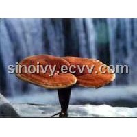Ganoderma(reishi) Extract and Ganoderma Spore Powder Extract
