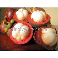 Mangosteen (Mangostin) Extract