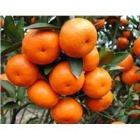 Sugar Mandarin