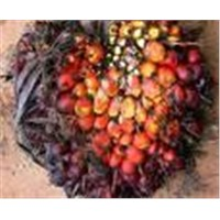Crude And Refine Palm Oil