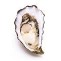 Oyster Peptide