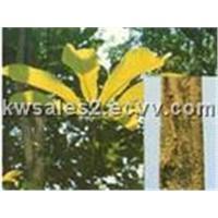 Magnolia Bark Powder Extract