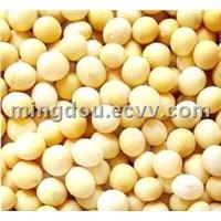 Soybean Extract-Isoflavones