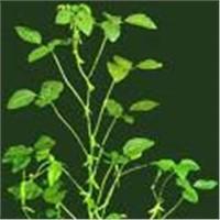 Soya Isoflavones 40% HPLC