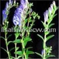 Baicalin 85% 90% 95% (HPLC / UV)