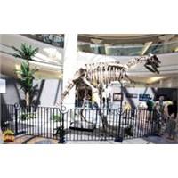 Prehistoric Dinosaur Skeleton