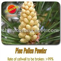 Cell Wall Broken Pine Pollen Powder
