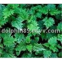 Nettle P.E.;Nettle Extract;Nettle;Silica1%