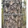 Plant Extract Pine Bark Extract
