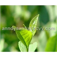 High Content Catechins (Iced-Water Soluble Type)