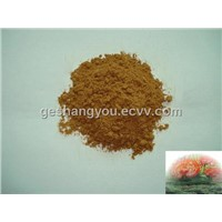 Reishi mycelium powder