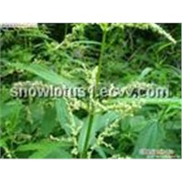 6,7-Dihydroxybergamotin (Nettle Extract)