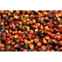 CRUDE PALM OIL (CPO), REFINED, BLEACHED & DEODORISED (RBD) PALM OLEIN, PALM KERNEL OIL