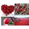 Cranberry Extract Anthocyanin 10%,25%; PAC 10%